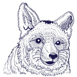 Liška Reference Ilustrace Koblížek